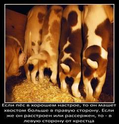 http://s1.uploads.ru/t/KWfxO.jpg