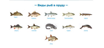 http://s1.uploads.ru/t/L7B0V.png