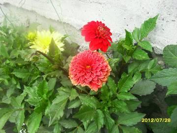 http://s1.uploads.ru/t/MNk2J.jpg