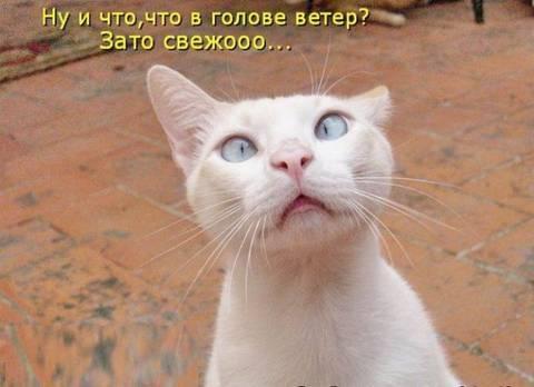 http://s1.uploads.ru/t/NE8if.jpg