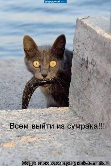 http://s1.uploads.ru/t/NhtAV.jpg