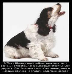http://s1.uploads.ru/t/NmBME.jpg