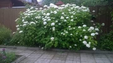 http://s1.uploads.ru/t/OXUfJ.jpg