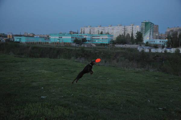 http://s1.uploads.ru/t/Oardu.jpg