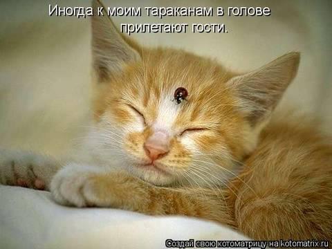 http://s1.uploads.ru/t/PWSog.jpg