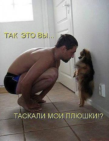 http://s1.uploads.ru/t/PigwQ.jpg