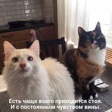 http://s1.uploads.ru/t/R8v3Q.jpg