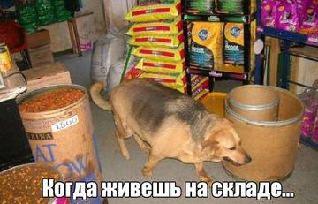 http://s1.uploads.ru/t/S1eIZ.jpg