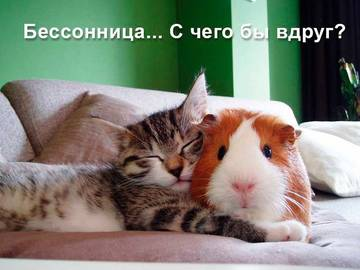 http://s1.uploads.ru/t/S9hyb.jpg