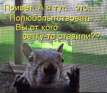 http://s1.uploads.ru/t/SO5Xj.jpg