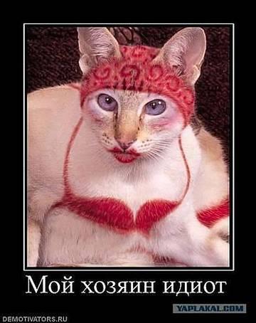 http://s1.uploads.ru/t/Sy4R2.jpg