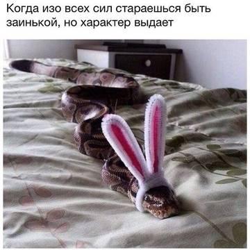 http://s1.uploads.ru/t/TZ2gO.jpg