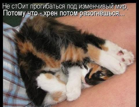 http://s1.uploads.ru/t/UNzyb.jpg