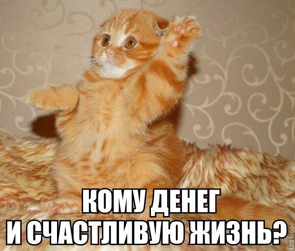 http://s1.uploads.ru/t/UOtHK.jpg