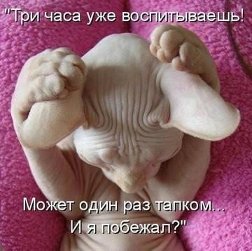 http://s1.uploads.ru/t/UmZbE.jpg