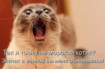 http://s1.uploads.ru/t/VFwzT.jpg