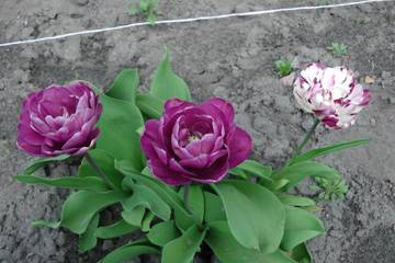 http://s1.uploads.ru/t/VNjTX.jpg