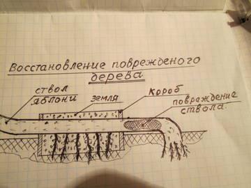 http://s1.uploads.ru/t/WbZKV.jpg
