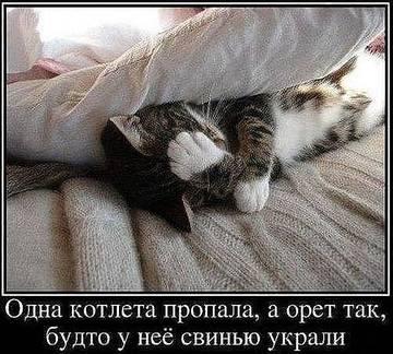 http://s1.uploads.ru/t/XcBsx.jpg
