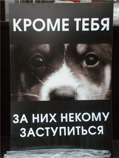 http://s1.uploads.ru/t/ZEYjA.jpg