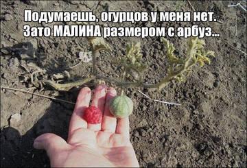http://s1.uploads.ru/t/bvenF.jpg