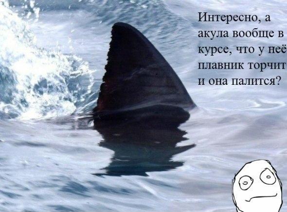 http://s1.uploads.ru/t/cKFnG.jpg