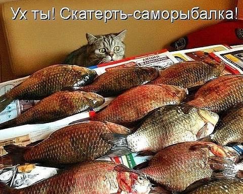http://s1.uploads.ru/t/gdJcA.jpg