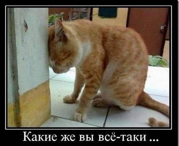 http://s1.uploads.ru/t/gkJhB.jpg