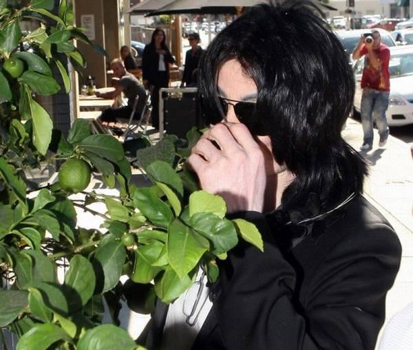 Майкл потёр листочки у лимона и нюхает (так все делают))) .
