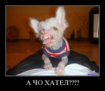 http://s1.uploads.ru/t/ihAVb.jpg