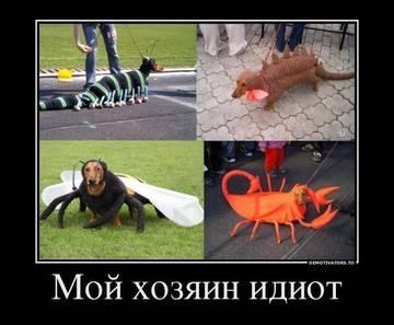 http://s1.uploads.ru/t/irVJh.jpg