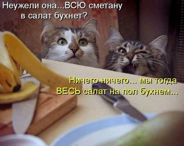 http://s1.uploads.ru/t/jqfKT.jpg
