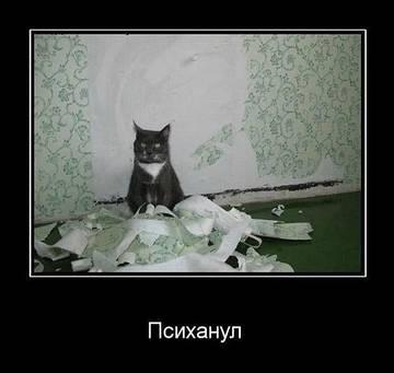 http://s1.uploads.ru/t/mDzqi.jpg