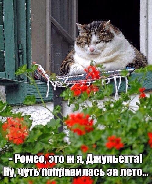 http://s1.uploads.ru/t/mt984.jpg