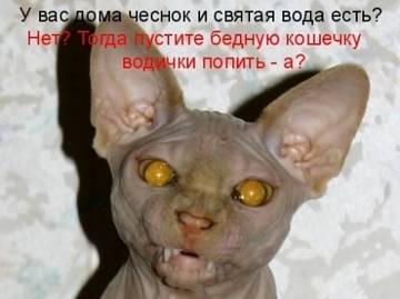 http://s1.uploads.ru/t/nwp2G.jpg