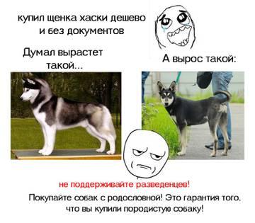 http://s1.uploads.ru/t/o9zEw.jpg