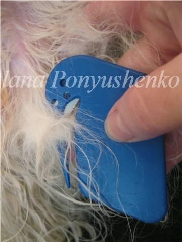 http://s1.uploads.ru/t/qSnh3.jpg