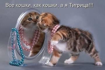http://s1.uploads.ru/t/rlGSU.jpg
