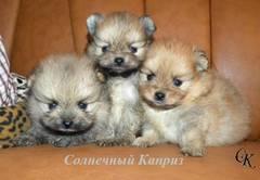 http://s1.uploads.ru/t/xNO4X.jpg