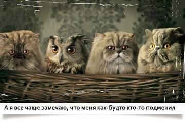 http://s1.uploads.ru/t/xTiuf.jpg