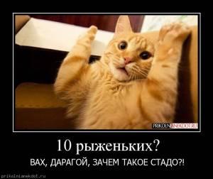 http://s1.uploads.ru/t/yTGrS.jpg
