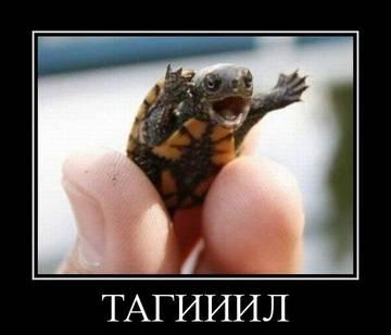 http://s1.uploads.ru/t/zfuc9.jpg