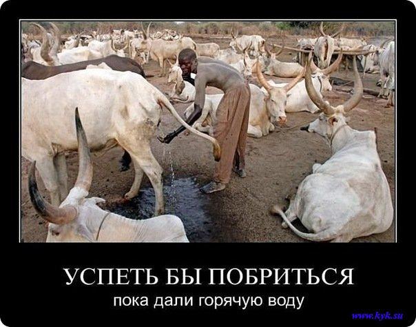 http://s1.uploads.ru/t1lmG.jpg