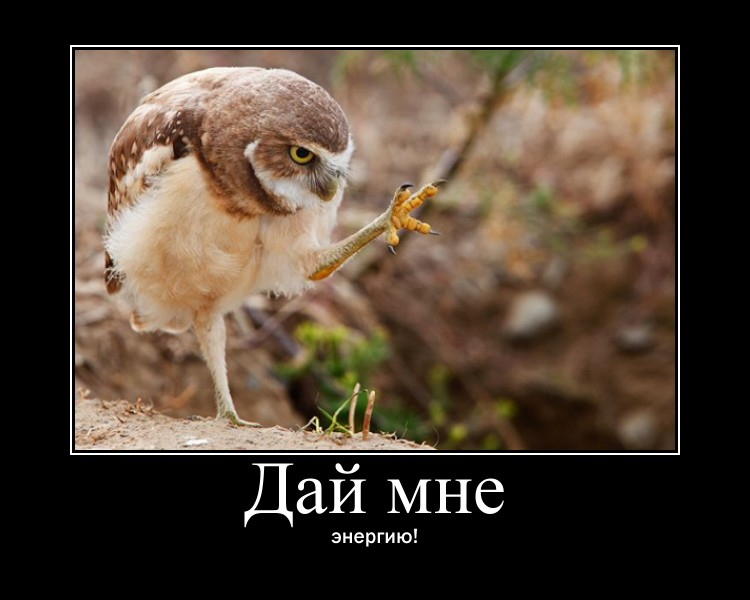 http://s1.uploads.ru/tgBLW.jpg