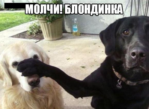 http://s1.uploads.ru/uwe2v.jpg