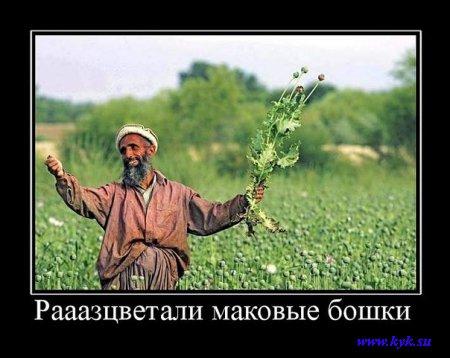 http://s1.uploads.ru/FNRi6.jpg