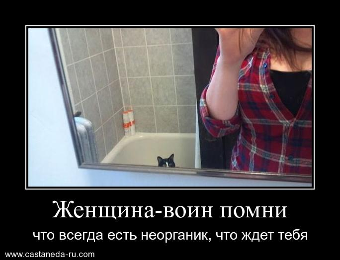 http://s1.uploads.ru/Rbc4e.jpg