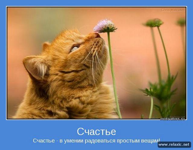 http://s1.uploads.ru/RtMFE.jpg