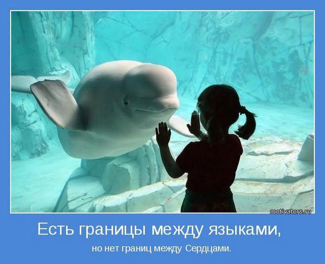 http://s1.uploads.ru/o0S7u.jpg