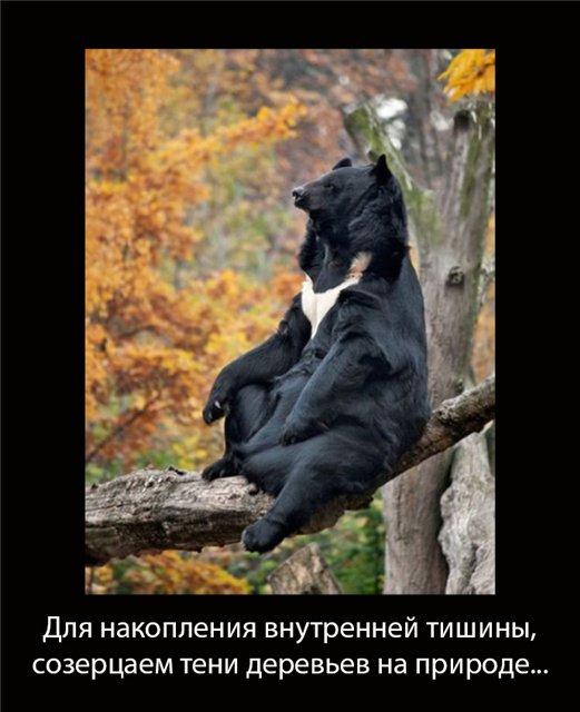 http://s1.uploads.ru/qH4Nn.jpg